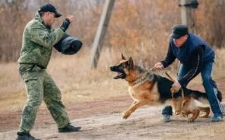 Самые опасные собаки — фото и описание