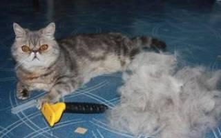 Расческа для кошек, как правильно выбрать и отзывы про фурминатор для кошки