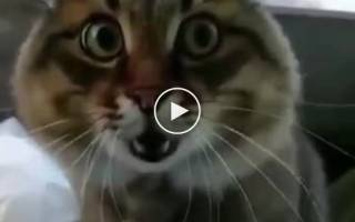 В Индонезии на видео сняли схватку двух огромных варанов