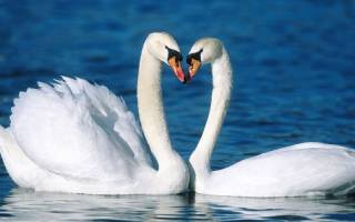Самые крепкие пары птиц и зверей