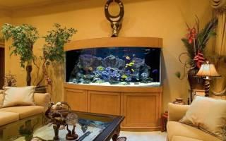 Как разбогатеть с помощью аквариума