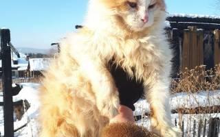 Уральский кот Рыжик второй год ждёт погибших хозяев