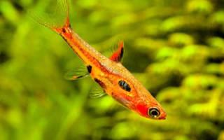 Фото с названиями и описанием аквариумных рыбок для начинающих аквариумистов