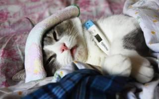 Симптомы гепатита у вашей кошки