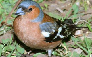 Какие птицы живут в Ленинградской области: виды, их особенности, фото и названия