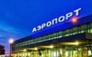 Лоси появились у входа в один из терминалов Пермского аэропорта