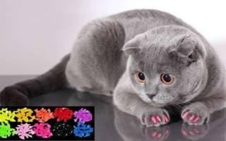 Применение силиконовых накладок на ногти: сможет ли кошка когтить и как реагирует кошка