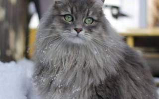 Марфлоксин для кошек: инъекции и таблетки, инструкция по применению