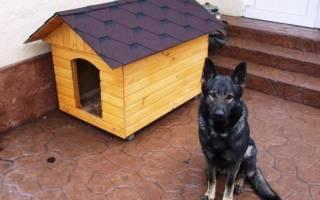 Почему собака не спит в будке, как её приучить к этому