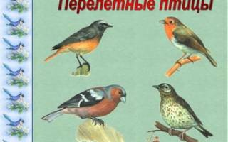 Список и характеристика перелетных птиц, какие птицы остаются зимовать?