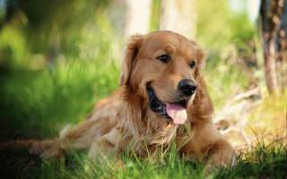 Породы собак, которые отлично ладят с детьми