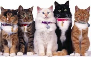 Лечебные породы кошек