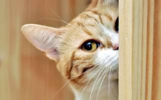 Почему кошка сидит у двери