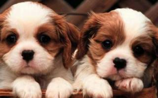 Самые милые собаки — фото и описание