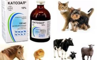 Как лечить кошек и собак Катозалом: состав, инструкция по применению препарата для животных, противопоказания
