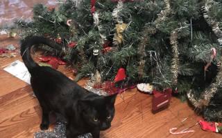 Коты против новогодних ёлок — фото