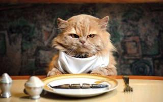 Почему кошки играют с едой: причины, как отучить