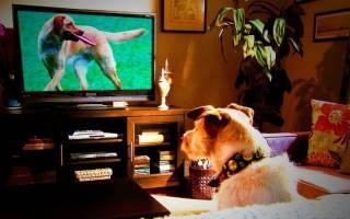 По каким причинам собаки смотрят телевизор