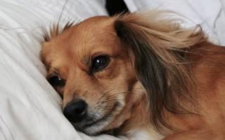 Признаки отравления у собак и первая помощь — рекомендации специалистов