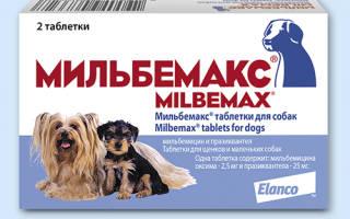 Мильбемакс для кошек, маленьких щенков и взрослых собак: инструкция и показания по применению