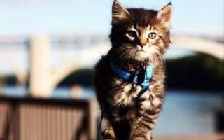 Почему кошек не нужно выгуливать на улице