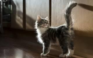Почему нельзя таскать кота за хвост