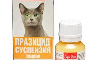 Противогельминтный препарат для кошек Празицид-суспензия плюс: инструкция по применению и отзывы владельцев
