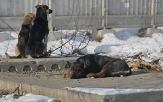 Известный иностранный предприниматель посетил Россию и поддержал проект строительства приютов для бездомных животных