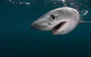 На двоих детей в штате Нью-Йорк напала акула