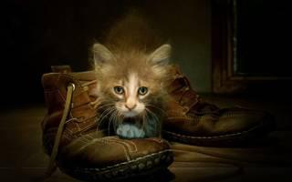 Кот метит в доме — когда начинает, почему и что делать