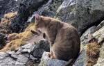 Альпинист забрался на самую высокую гору Польши и увидел там кота
