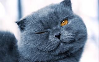 Что сулит людям серый кот