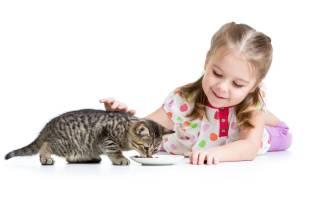Почему в доме не приживаются кошки и коты