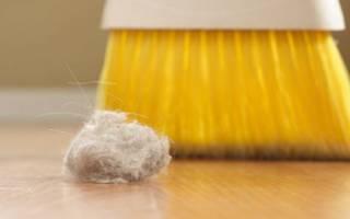 Пылевые клещи: как проявляется аллергия, способы борьбы в домашних условиях, фото укусов на теле, чем они опасны
