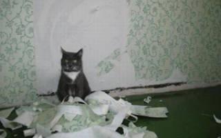Как отучить кота или кошку от вредной привычки драть обои и мебель