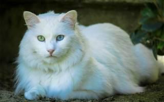 Какие породы кошек самые древние