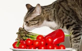 Какие виды продуктов нельзя давать кошкам