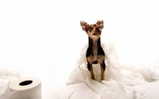 Как приучать собаку к туалету на улице и в доме: как научить собаку ходить на унитаз