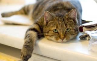 Что предпринять, если кошка не ест и не пьет воду, а только спит: возможные причины и первая помощь коту