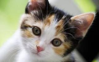 Клички для кошек девочек: красивые и прикольные, необычные и короткие