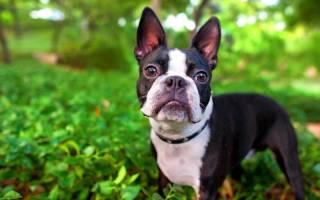 5 пород собак для очень занятых людей