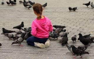 Почему не нужно кормить голубей на улице хлебными крошками и семечками
