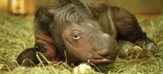 Фотографии редких и необычных животных