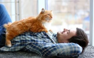 Как следить за здоровьем и потребностями кошки