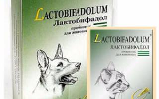 Лактобифадол для собак: инструкция по применению, состав и форма выпуска, побочные эффекты