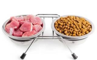 Чем и сколько раз кормить щенка, промышленый корм или натуральная пища