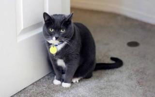 Простые и дешевые способы избавления от запаха кошачьей мочи в доме