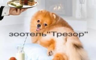 Как фотографировать собак — советы с фото
