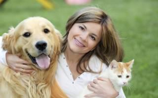 Значение популярных кличек собак и кошек
