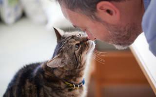Значение взглядов, которые бросает на вас ваша кошка